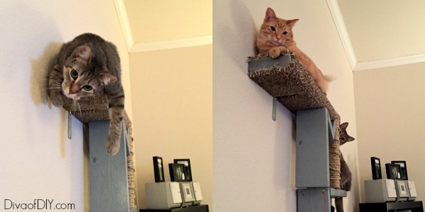 attention cat lovers let me show you how to make cat scratching diy shelves